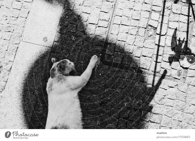 Kitty dreams in the shade Deserted Animal Pet Cat Animal face Paw 1 Sleep Dream Black White Relaxation Black & white photo Exterior shot Detail Copy Space left