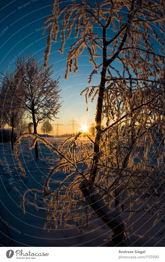 winter wonderland Winter Snow Ice Cold Tree White Sky Blue Dresden Hoar frost Frost Sunrise Morning Meadow Field Celestial bodies and the universe