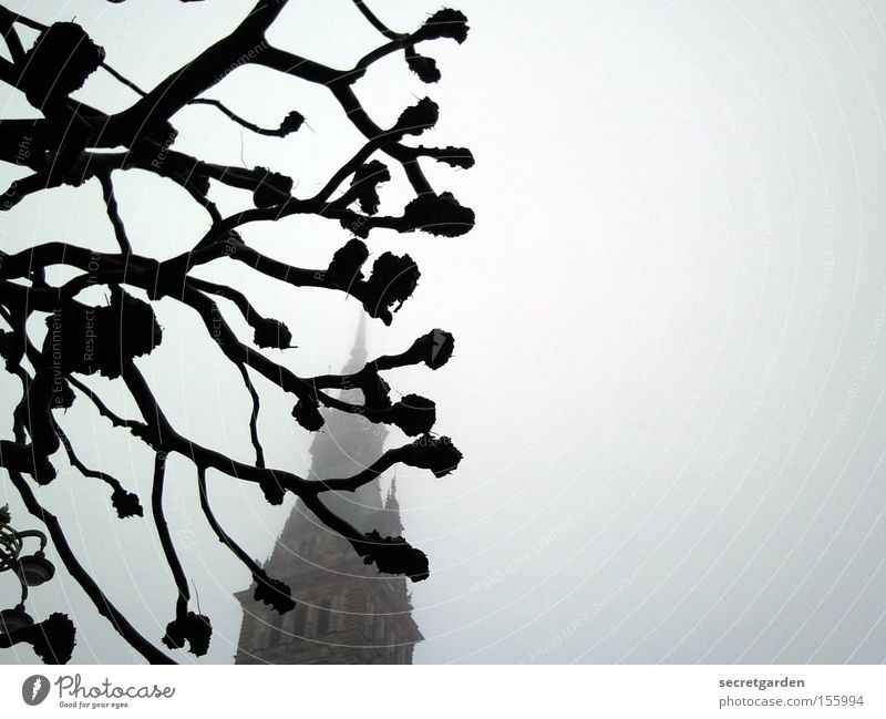 tree architecture Tree Fog Winter Cold Dark City hall Building Mystic Cut Black & white photo Fear Panic knobbel Religion and faith Eerie Creepy Art Hide