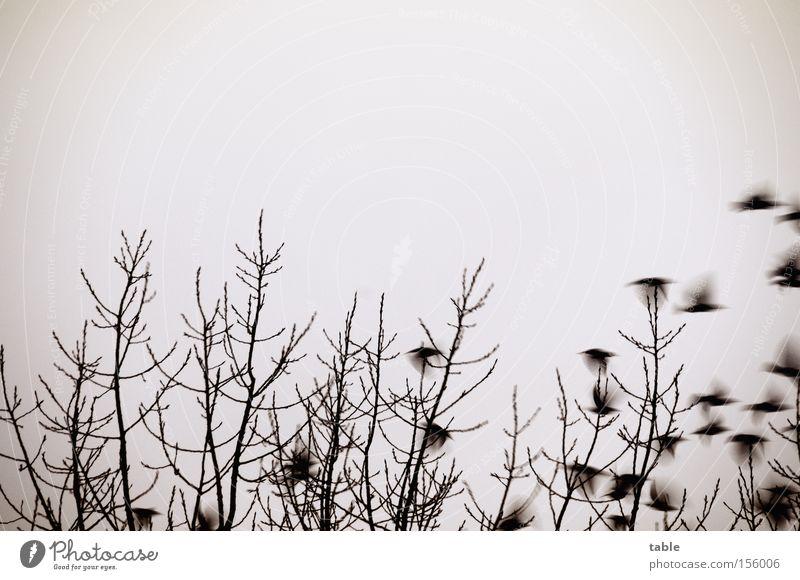 Sky Tree Winter Bird Fear Flying Beginning Departure Panic Sing Crash Assembly Flock of birds Blackbird Accessible