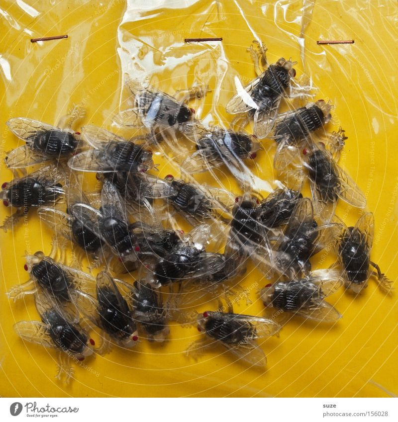 All fresh! Feasts & Celebrations Hallowe'en Fly Plastic Disgust Fresh Creepy Yellow Insect Packing film Joke article Many Funny Reflection Decoration Packaging