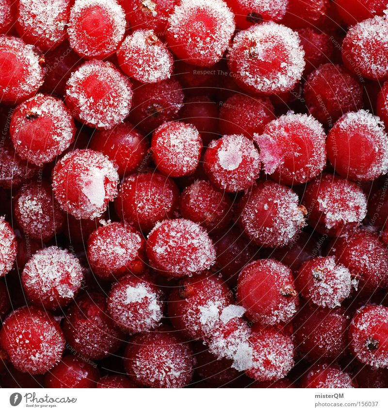 Red Winter Colour Berries Dye Healthy Fruit Force Fresh Frost Frozen Delicious Vitamin Juicy Physics Vegetarian diet