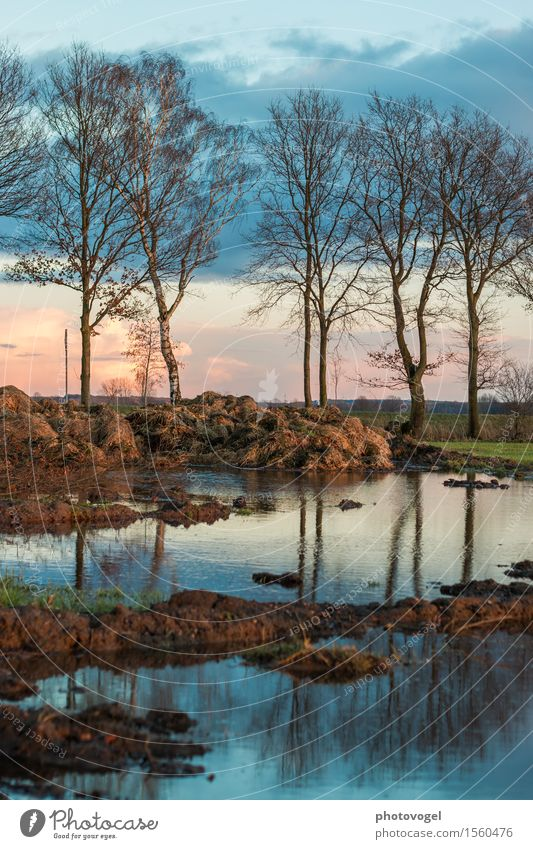 evening mood Environment Plant Earth Water Beautiful weather Tree Field Blue Brown Green Contentment Manure heap Puddle Dusk Mirror image Colour photo