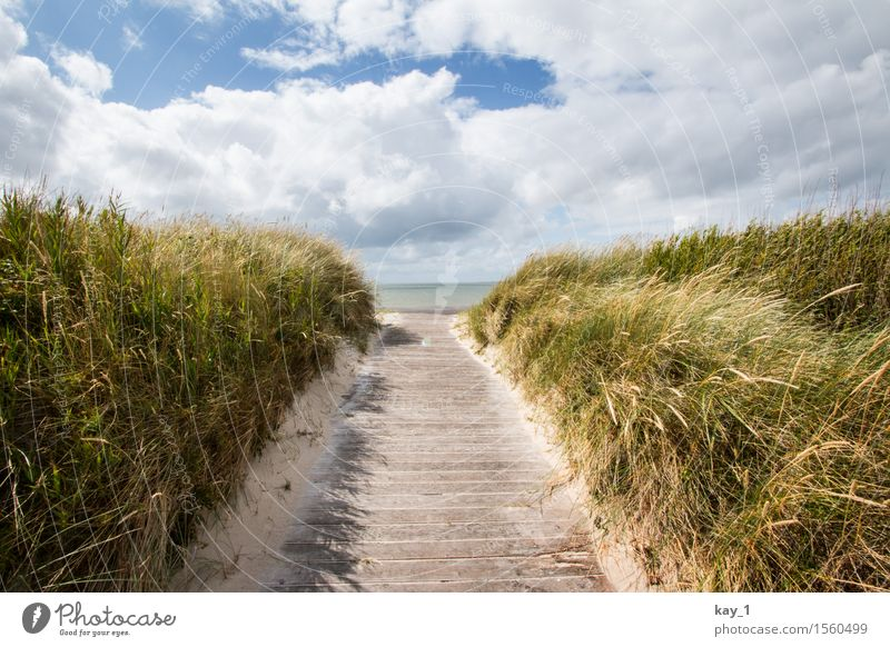to the beach! Far-off places Freedom Summer vacation Beach Ocean Island Nature Landscape Sand Clouds Beautiful weather Grass Coast North Sea Fohr Relaxation