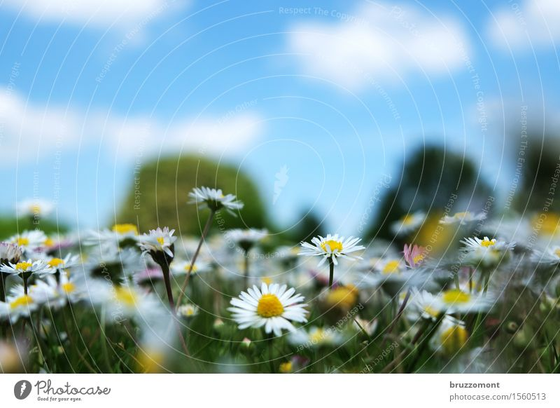 10 beers too much Vegetarian diet Alternative medicine Nature Plant Sky Clouds Spring Summer Park Meadow Flower Flower meadow Daisy Fragrance Beautiful Blue