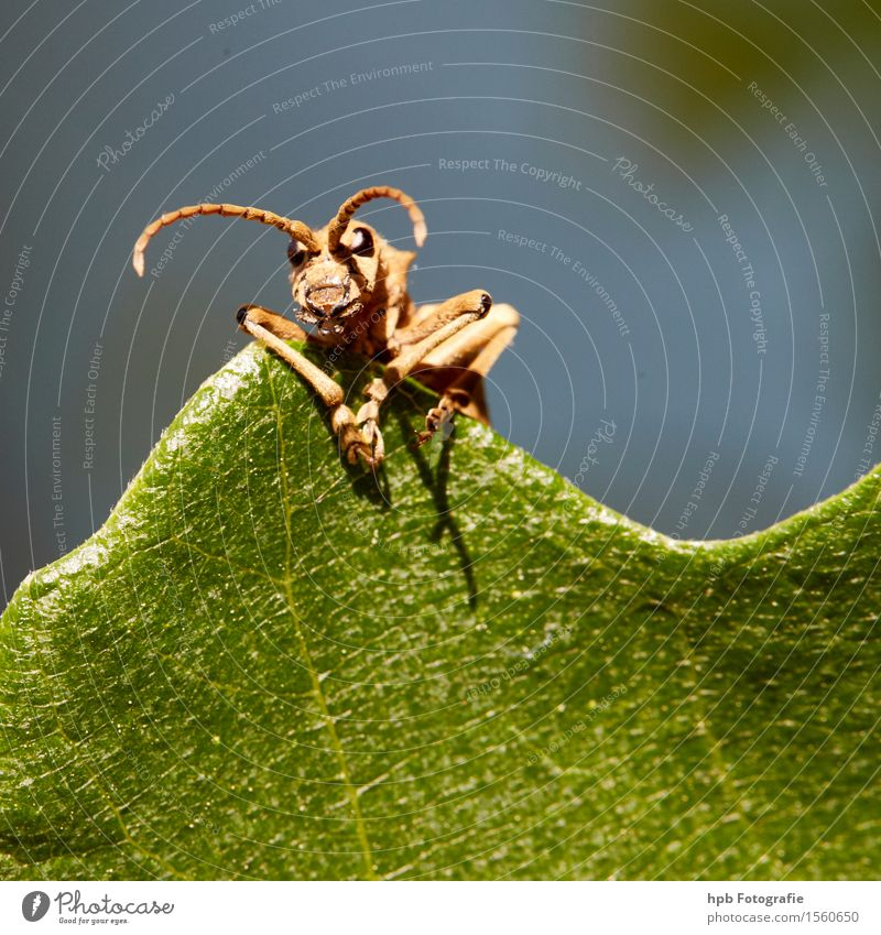 unknown beetle Nature Animal Summer Beautiful weather Garden Park Meadow Forest Wild animal Beetle Animal face 1 Observe Think To talk Discover Looking Wait
