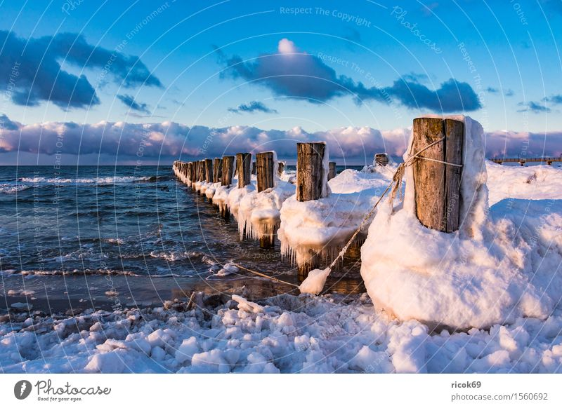 Nature Vacation & Travel Water Ocean Relaxation Landscape Clouds Winter Beach Cold Coast Wood Tourism Idyll Romance Baltic Sea