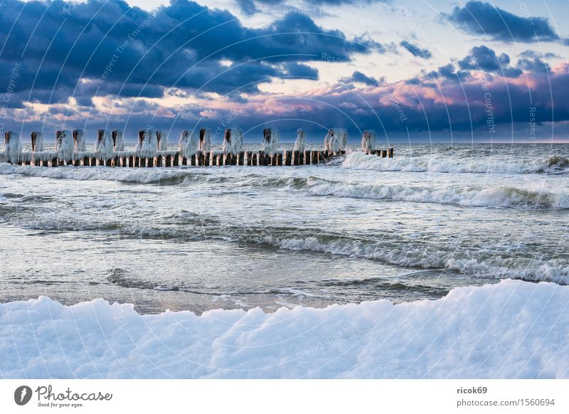 Stage at the Baltic Sea coast near Zingst Relaxation Vacation & Travel Tourism Beach Ocean Winter Nature Landscape Water Clouds Coast Wood Cold Romance Idyll