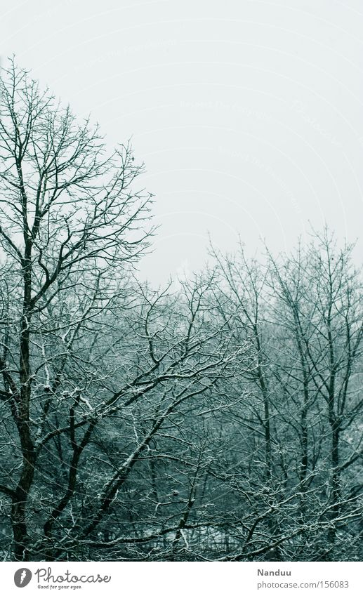 Nature Sky Tree Winter Cold Snow Gray Ice Weather Gloomy Frost Branch Transience Hoar frost December January