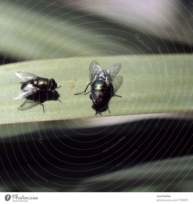 Dirty Fly Flying Aviation Bathroom Wing Insect Toilet Feces Crawl Worm Uncomfortable Compound eye