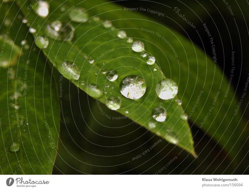 Plant Summer Water Leaf Calm Sadness Rain Dew Creeper