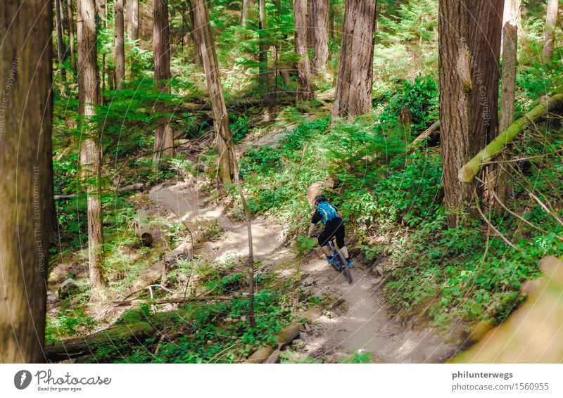 Smurf? Leisure and hobbies Cycling Environment Nature Landscape Sun Climate Beautiful weather Plant Tree Forest Virgin forest Mountain Esthetic Adventure