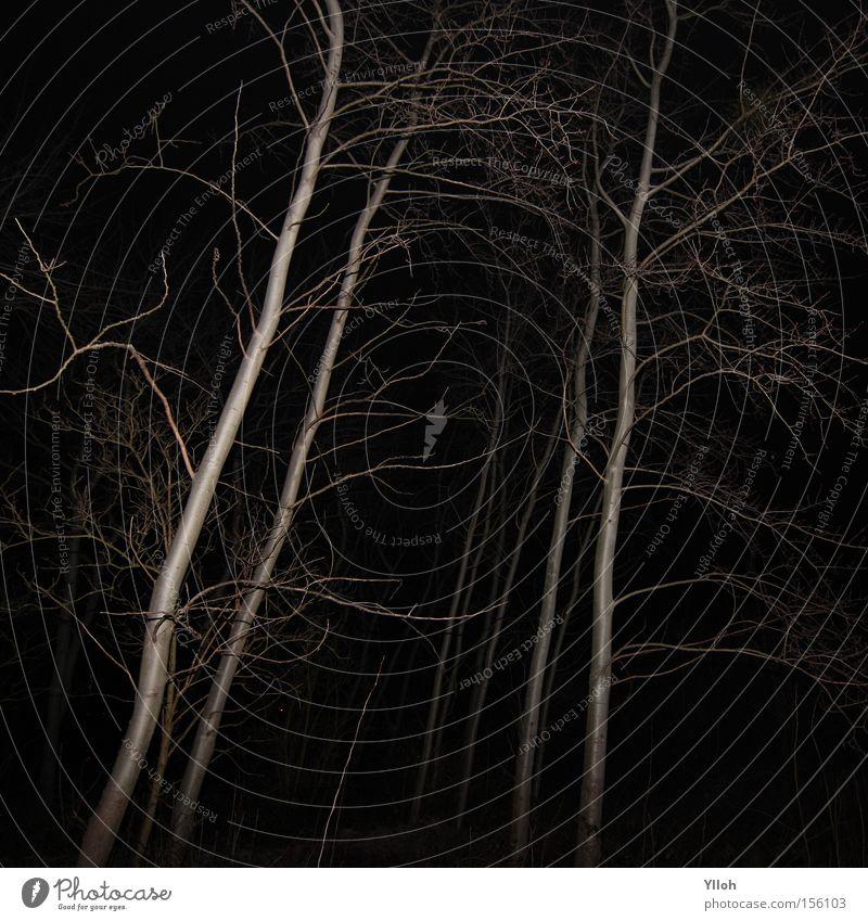 White Tree Winter Black Forest Dark Death Gray Fear Dangerous Film industry Threat Branch Creepy Panic Bleak