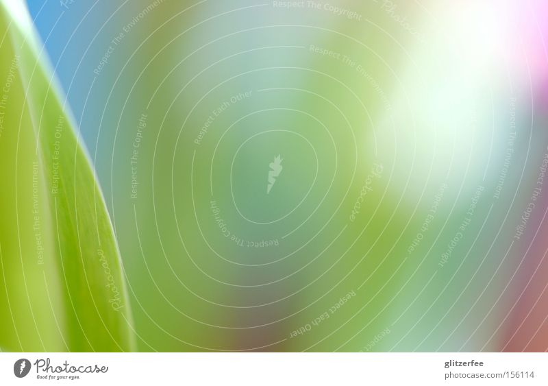 Blue Green Colour Leaf Spring Background picture Pink Fresh Radiation Tulip Cyan Pastel tone Light Macro (Extreme close-up) Bulb flowers