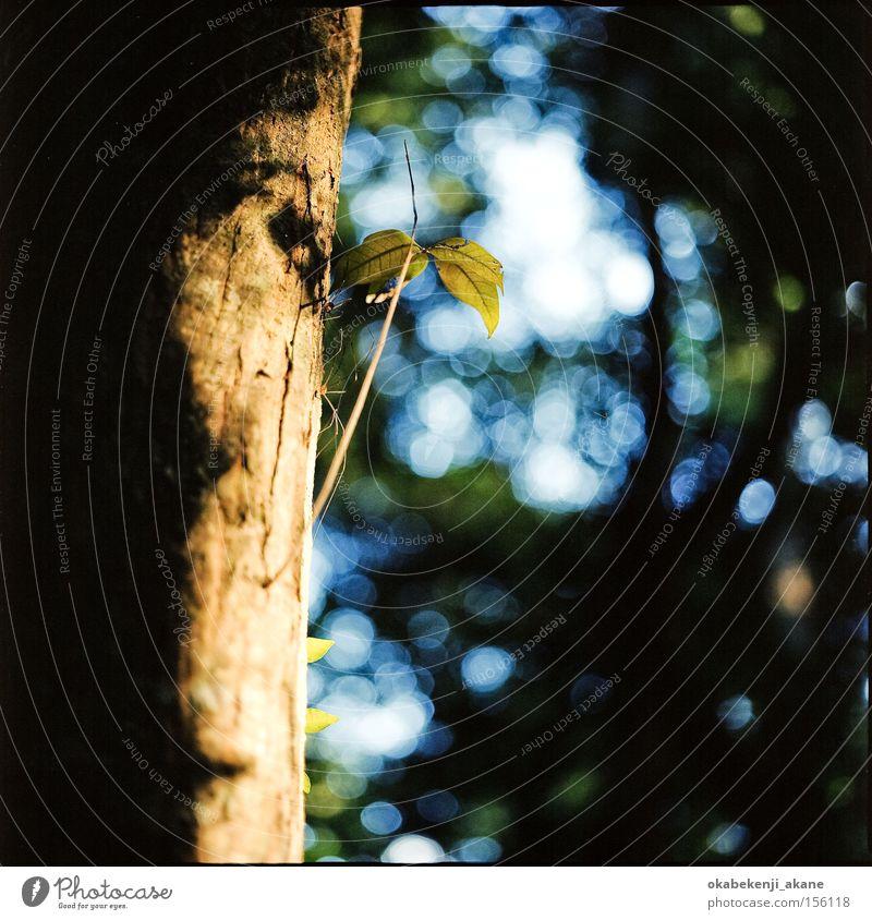 spider Air Ambience Light Light (Natural Phenomenon) Shrine Spider Green Square Jinja Japan Tokyo light effect Hasselblad