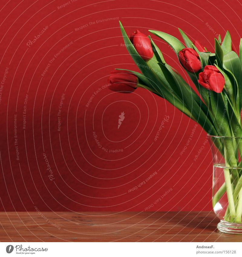 Red Flower Wall (building) Spring Vase Bouquet Still Life Living room Wallpaper Tulip Bulb flowers Spring flower Flower vase Spring colours