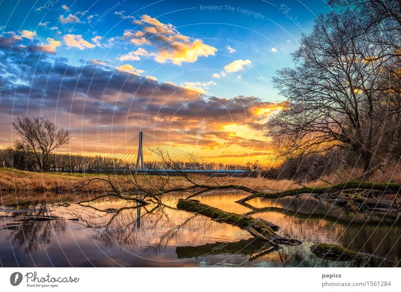 Winter sunset at the lake near Magdeburg Nature Landscape Plant Water Sky Clouds Sun Sunrise Sunset Weather Beautiful weather Tree Grass Bushes Wild plant Field