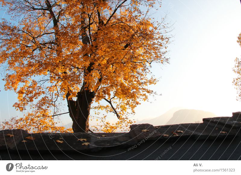 autumn morning Nature Landscape Plant Sky Sun Autumn Beautiful weather Fog Tree Wall (barrier) Wall (building) Blue Brown Gray Orange White Colour photo