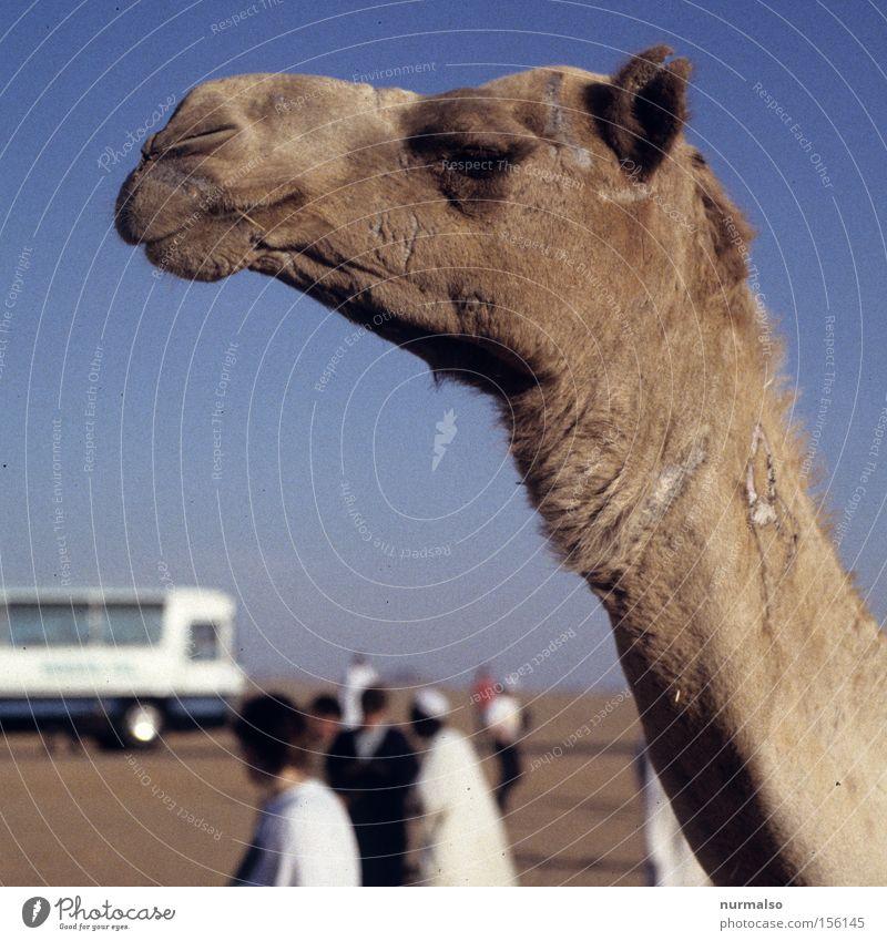 Human being Vacation & Travel Sand Travel photography Africa Desert Culture Past Mammal Egypt History book Camel Pyramid Caravan Dromedary