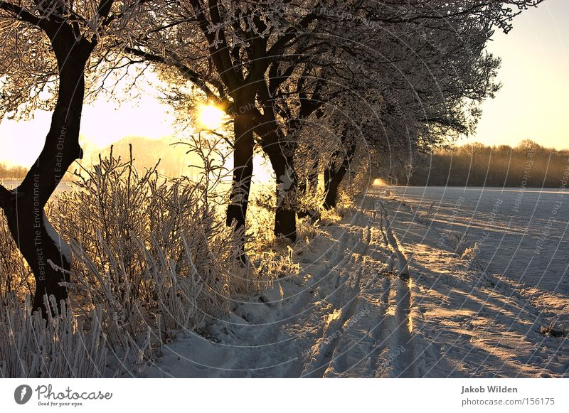 Winter on the Lower Rhine Sun Snow Back-light Tree White Frost Cold Niederrhein Lanes & trails Tracks