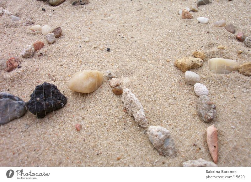 star-tailed! Beach Grain of sand Sand star jagged Stone