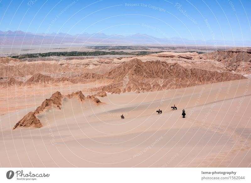 Vacation & Travel Animal Far-off places Sand Rock Trip Adventure Horse Desert Hot Dune Expedition Chile South America Ride Oasis