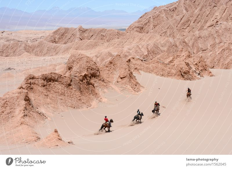 Vacation & Travel Animal Far-off places Sand Rock Trip Adventure Horse Desert Dune Expedition Chile South America Ride Horse's gait Ride