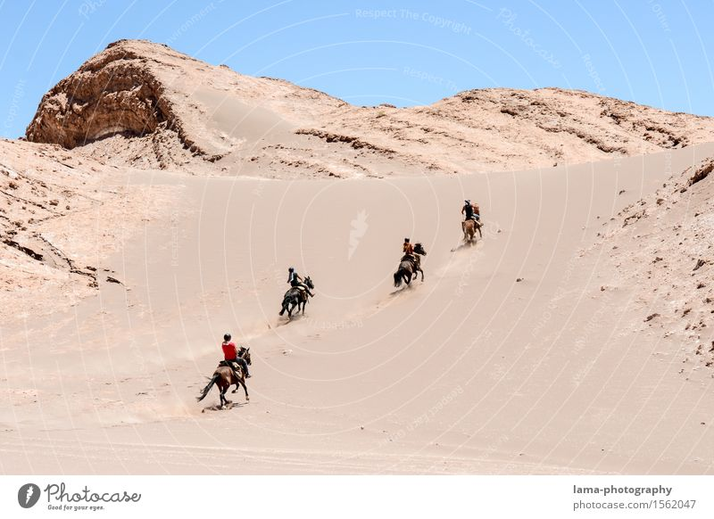 Desert Ride I Vacation & Travel Trip Adventure Expedition Salar de Atacama Dune Valle de la luna San Pedro de Atacama Chile South America Horse 4 Animal Joy