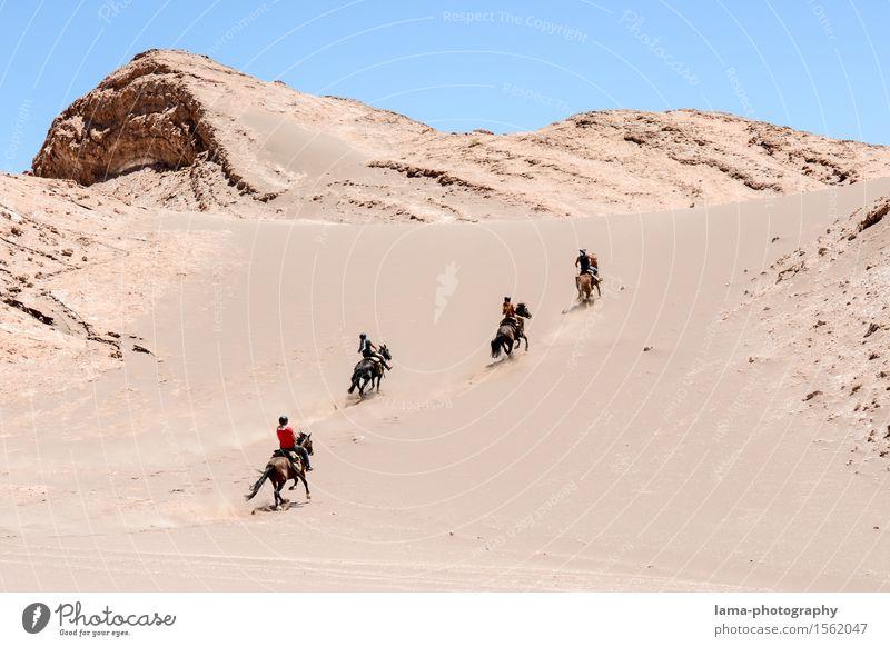 Vacation & Travel Animal Joy Trip Adventure Horse Desert Dune Expedition Chile South America Ride Salar de Atacama San Pedro de Atacama Valle de la luna