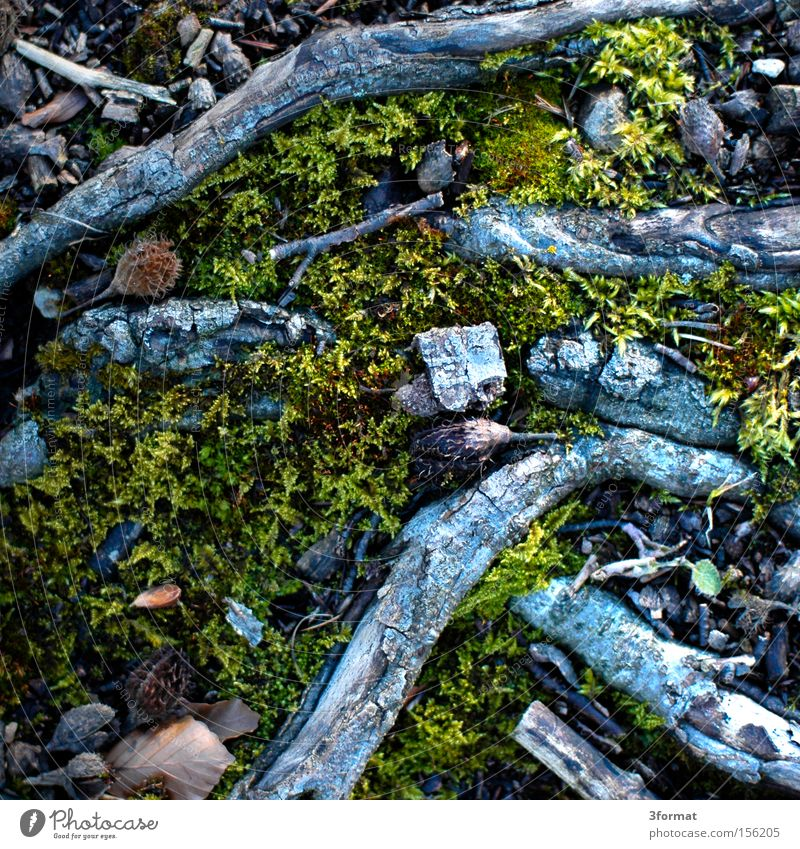 Nature Mountain Ground Floor covering Branch To fall Under Sudden fall Moss Downward Canada Carpet Woodground Undergrowth Direction