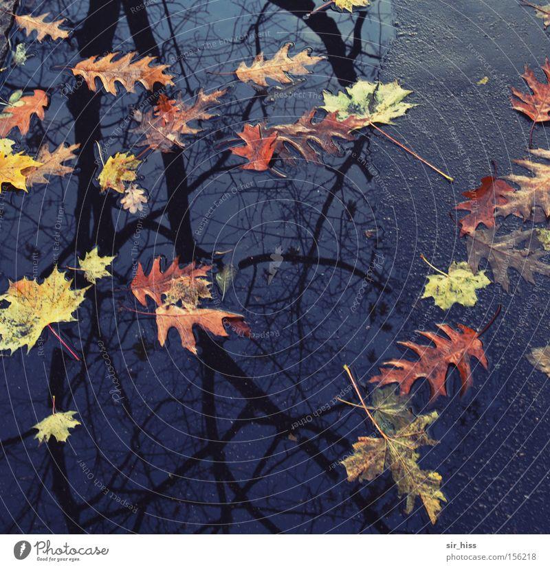 beginning and end Autumn Tree Leaf Puddle Asphalt Water Multicoloured End Decline Transience