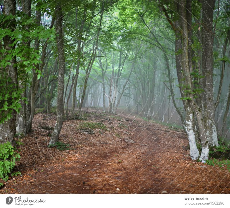 Green spring misty forest. May in Crimea Vacation & Travel Mountain Nature Landscape Plant Spring Fog Rain Tree Leaf Foliage plant Park Forest Hill Alps
