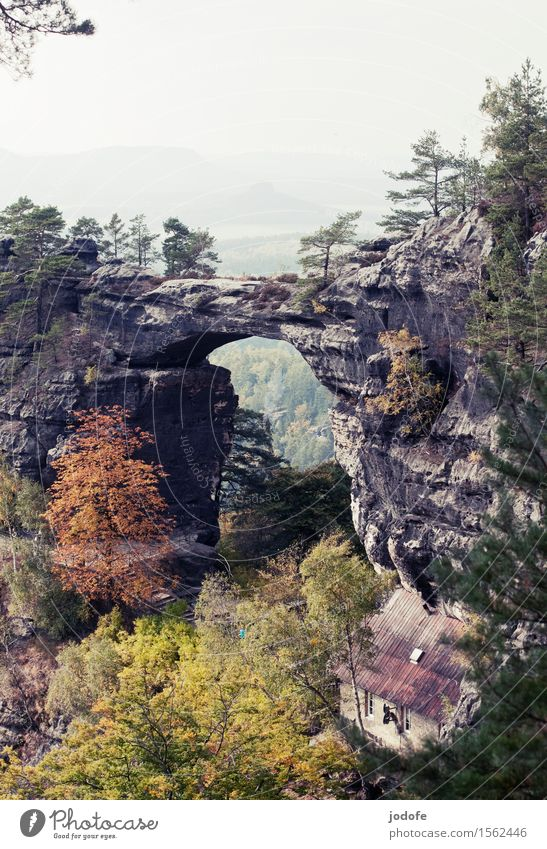 autumn Nature Landscape Plant Autumn Tree Forest Hill Rock Mountain Old Threat Retro Fear of heights Elbsandstone mountains Sandstone Dangerous Steep