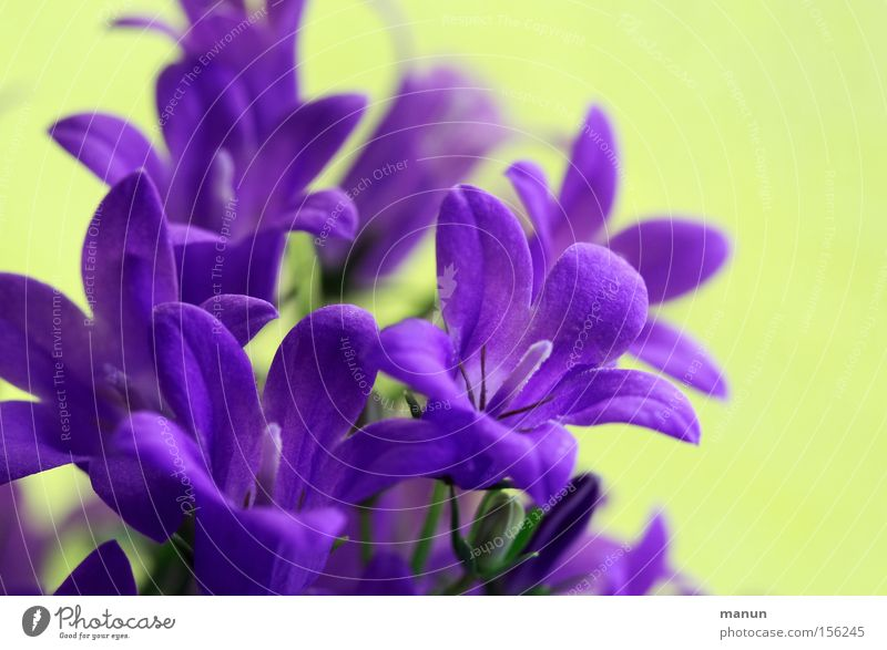 Heralds of Spring III Fresh Violet Positive Beautiful weather Warmth Blossom Blossoming Spring flower Spring day Spring colours Spring celebration Happy