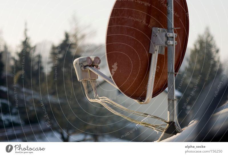 satellite dish Satellite dish Television TV set January Winter Bowl Red Digital photography Antenna Electrical equipment Technology Detail LNB
