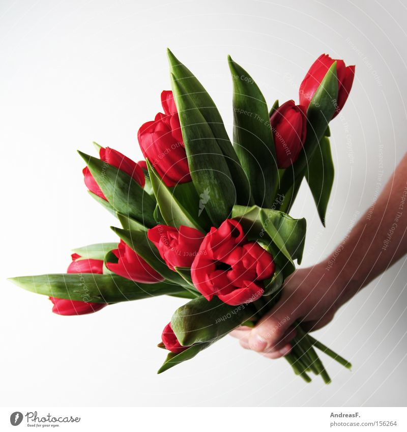 Flower Red Joy Jubilee Birthday Gift Bouquet Tulip Valentine's Day Donate Mother's Day Congratulations
