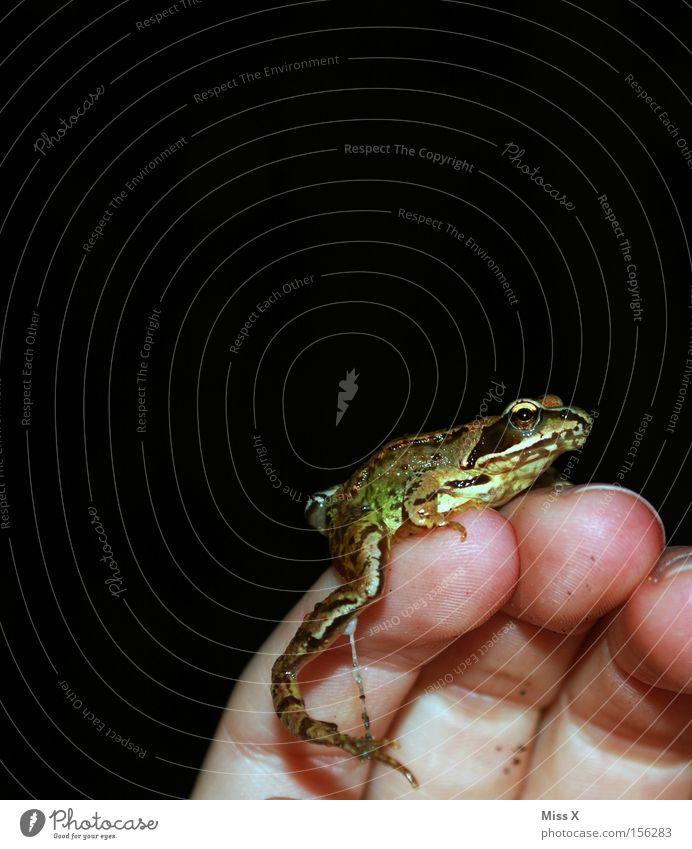 Hand Animal Fingers Frog Fairy tale Tree frog Slimy Amphibian Prince Prince Charming Frog Prince