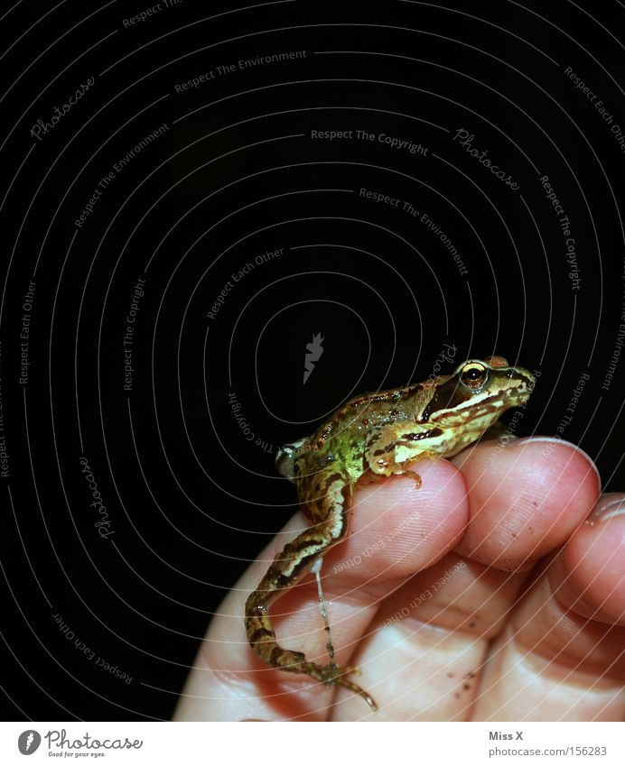 the Prince Colour photo Hand Fingers Animal Frog Slimy Frog Prince Prince Charming Fairy tale Amphibian Tree frog forest frog