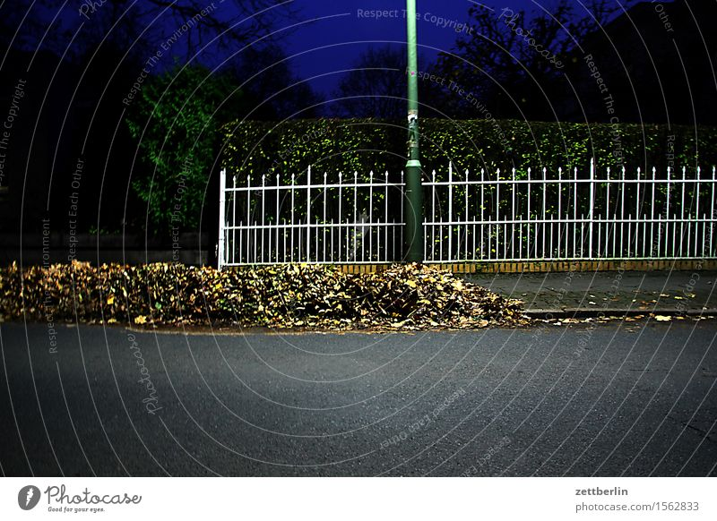Fence in the evening Metal Hedge Real estate Neighbor Border Possessions Street Asphalt Autumn Leaf Autumn leaves Deciduous tree Heap Clean Sweep Janitor