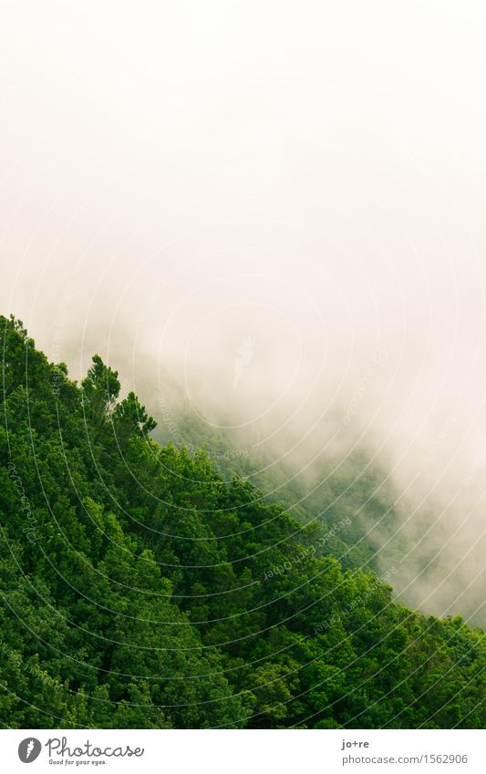 Anaga in the fog Nature Plant Clouds Fog Forest Mountain Anaga Mountains Tenerife Canaries Deserted Vacation & Travel Dream Hiking Gray Green Calm Colour photo