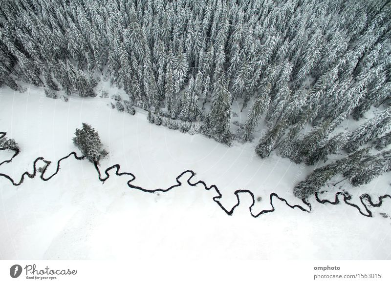 Aerial winter landscape of high pine trees and a little meandering stream Beautiful Snow Mountain Environment Nature Landscape Tree Park Forest Brook River