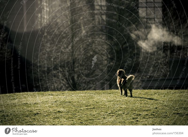 Just a Dream Loneliness Garden Dog Park Field Vision Storage area