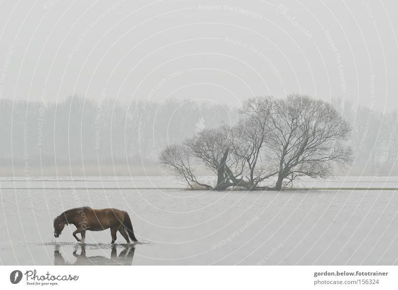 Water Loneliness Winter Landscape Horse River Doomed Brook Hopelessness Flood Deluge Clump of trees