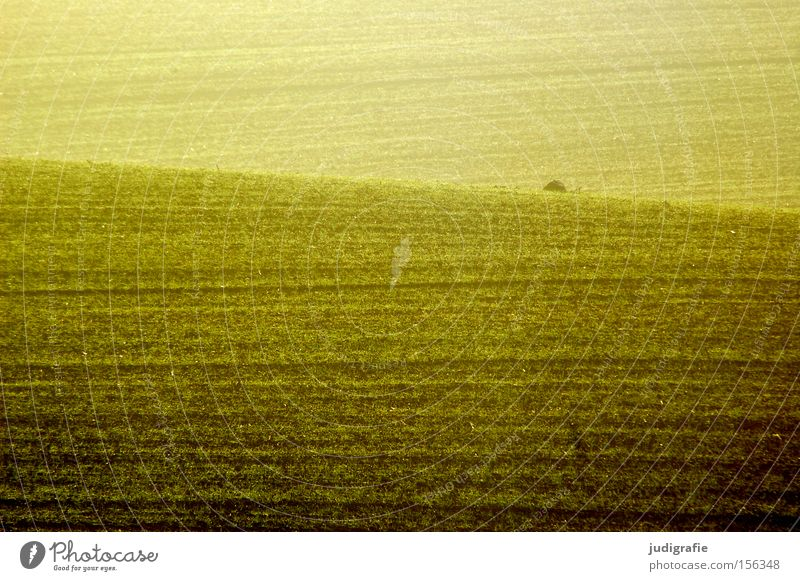 Colour Yellow Line Brown Earth Field Agriculture Agriculture Rural Sowing Plantlet