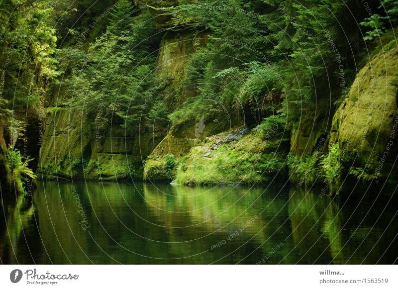 the silent gorge, also called Edmundsklamm, in Hrensko Bohemian Switzerland Nature Landscape Rock River Brook Green Rocky gorge Czech Republic