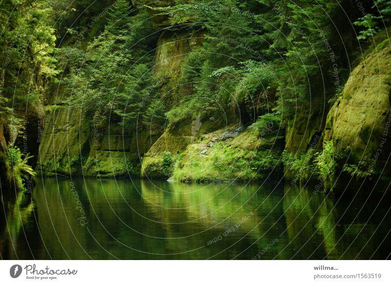 the silent ravine Nature Landscape Rock River Brook Green Rocky gorge Czech Republic Bohemian Switzerland Elbsandstone mountains Tree Overgrown Water