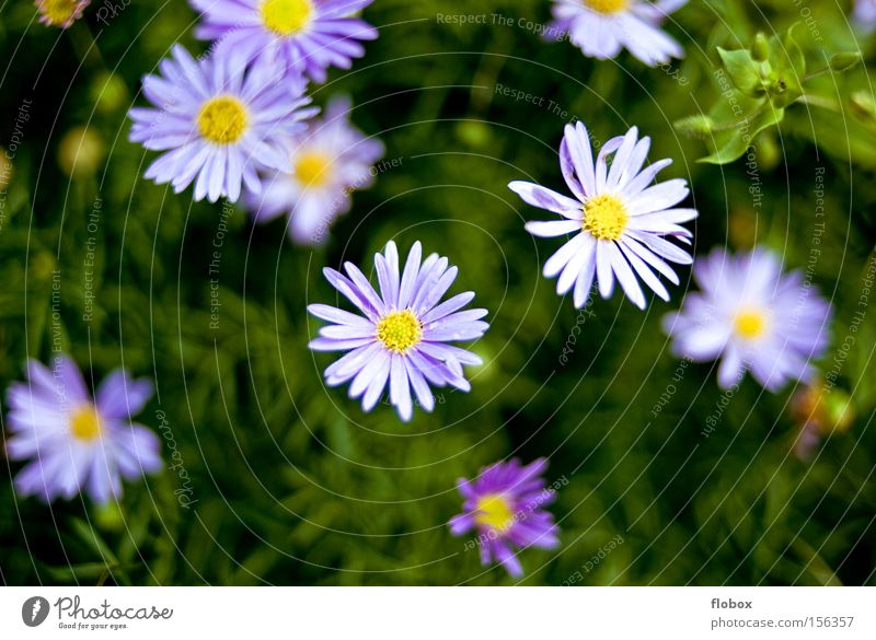 Nature Beautiful Flower Green Meadow Grass Spring Violet Sign Blossoming Environmental protection Flowerbed Spring flower