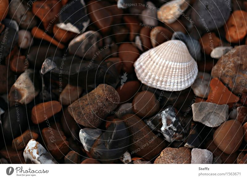 Shell & Co. IV Summer vacation Beach Nature Pebble beach Mussel Sea mussel Cockle Mussel shell Stone Sharp-edged Natural Beautiful Many Brown Vacation mood
