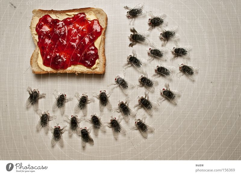 ALL YOU CAN EAT Food Bread Jam Nutrition Breakfast Organic produce Vegetarian diet Fasting Fly Decoration Plastic Delicious Funny Sweet Toast Butter