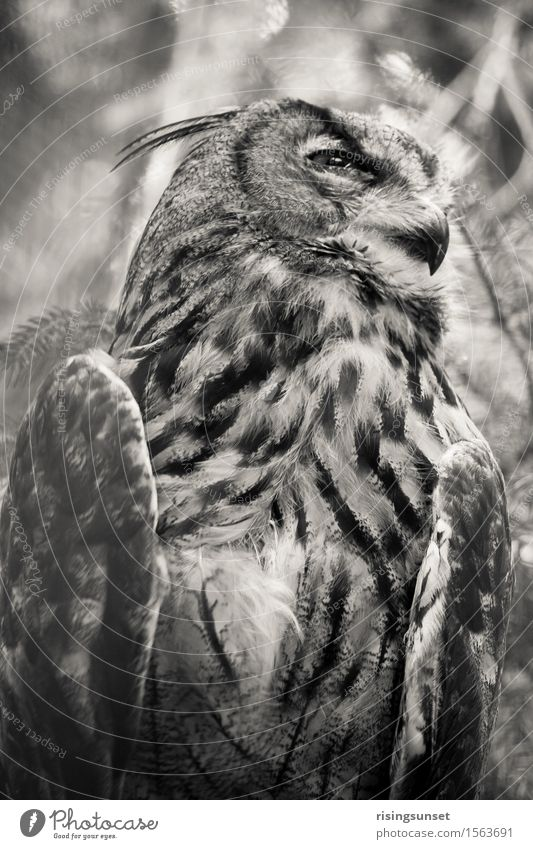 Nature White Calm Animal Black Bird Air Power Wild animal Sit Esthetic Wing Observe Threat Might Mysterious